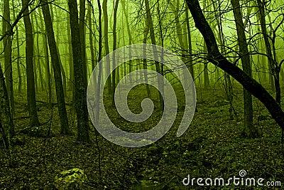 Green light glowing through forest fog