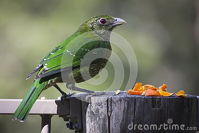 Green And Lime Bird On Gray Wood Log Free Public Domain Cc0 Image