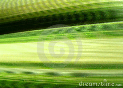 Green Line Leaf 5