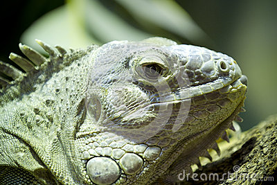 Green lizard skin detailing hard and scaly