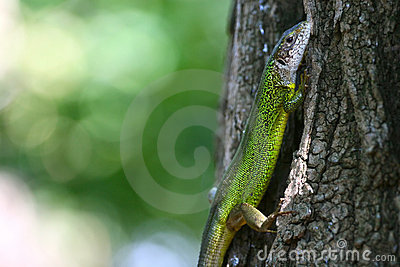 Green lizard on a tree bark