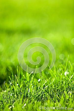 Green luscious grass
