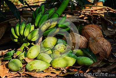 Green mangoes with bananas and coconuts dry leafs