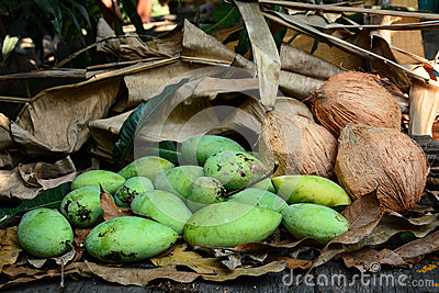 green mangoes with coconuts  on dry leafs
