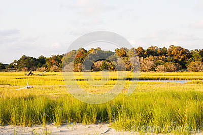 Green Marsh Grass by Beach