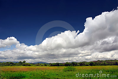 Green meadow in blossom under beautiful sky