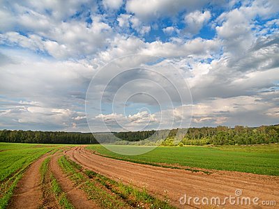 Green meadow with cloudy blue sky