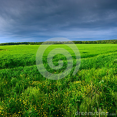 Green meadow under blue sky