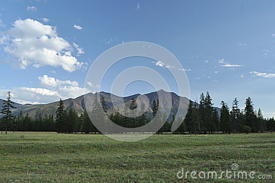 Green meadows in mountain valley of the river