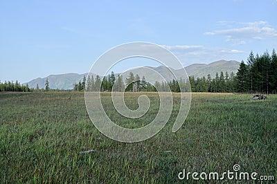 Green meadows in mountain valley