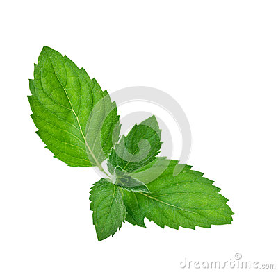 Green mint Leaf
