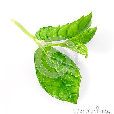 Green Mint Macro