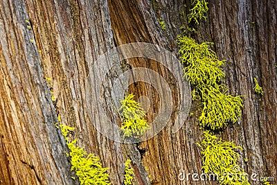 Green Moss on Bark