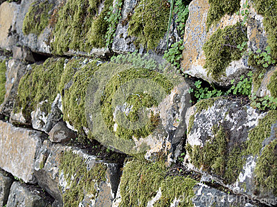 Green moss grows on old rock wall