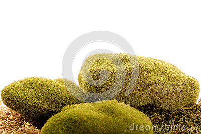 green moss rock vegetation