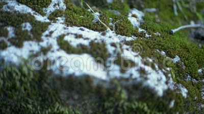 Green moss on rocks. Close-up, detail in forest stock footage
