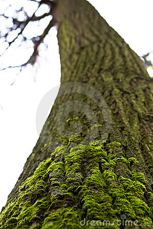 Green moss on the tree trunk