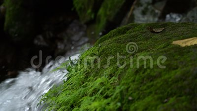 Green moss and waterfall in rainforest.  stock video