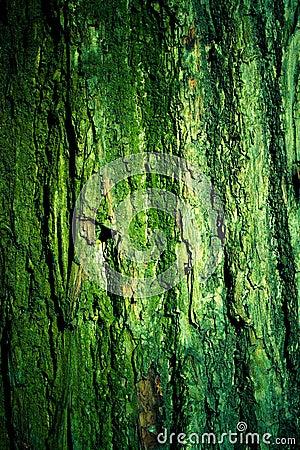 Green mossy tree bark texture