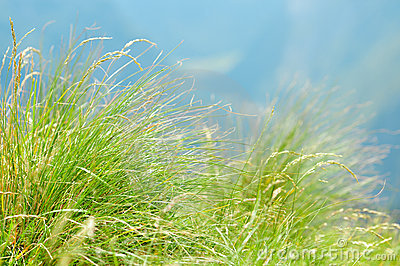 Green mountain grass close-up.