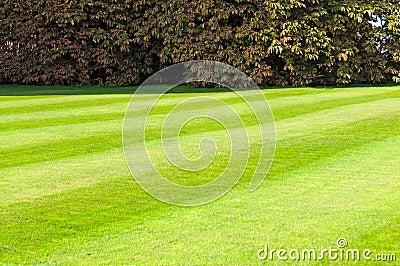Green mowed lawn