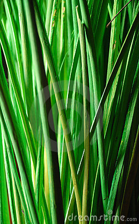 Free Nature Stock Photos Closeup of green bamboo grass