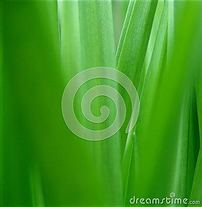 Green nature.