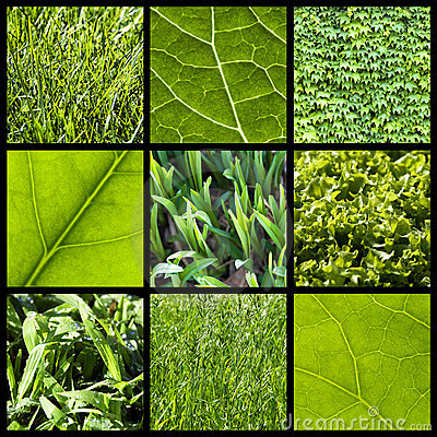 Green nature background - collage