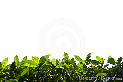 Green nature foliage down border