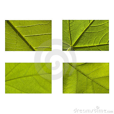 Green nature leaf