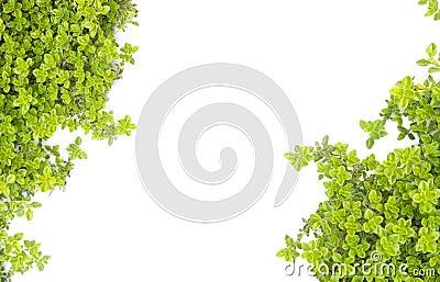 Green nature motive