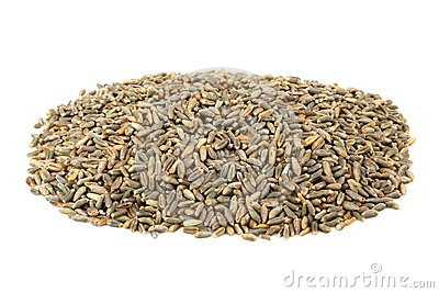 Green oat grain