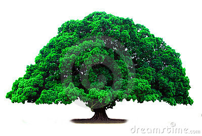 Green old tree