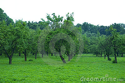 Green orchard