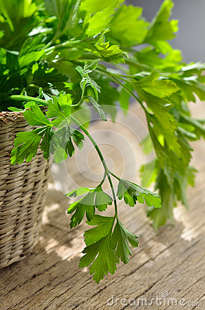 Free Green, Organic Parsley Stock Photography - 31343182
