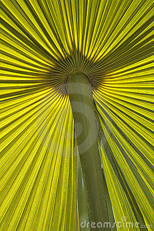 Green Palm fond