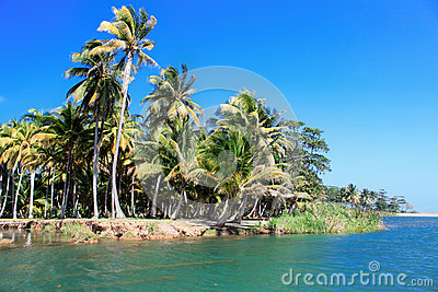 Green palm forest, beautiful  landscape in Baracoa