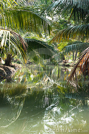 Green palm forest by a small canal