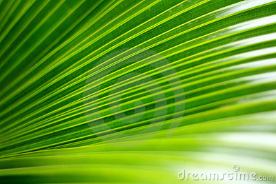 Green palm leaf Stock Photo