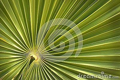 Green palm leaf background