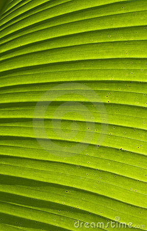 Green palm leaf texture 01