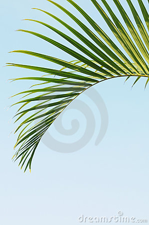 The green palm leave
