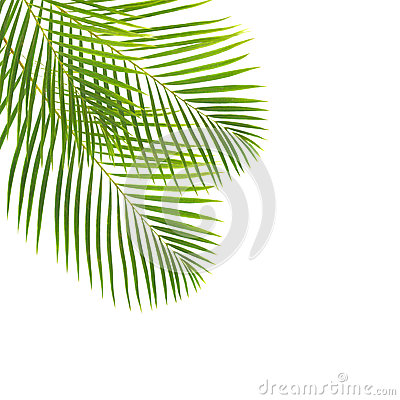 Free Green Palm Leaves Stock Photo - 39976530
