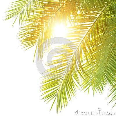 Green palm leaves border