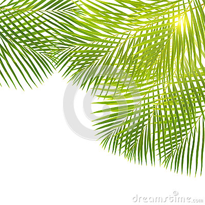 Green palm leaves border