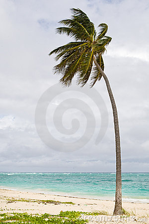 Green Palm on a sand beach under cloud sky