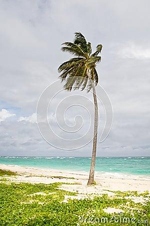 Green Palm on a sand beach under cloud sky