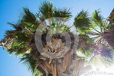 Green palm tree on blue sky background Stock Photo