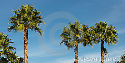 Green palm trees against blue sky