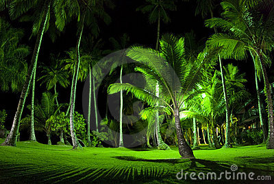 Green Palm Trees at Night
